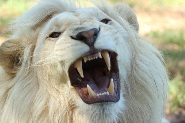 ביטחון עצמי, מסומל כתמונת אריה.