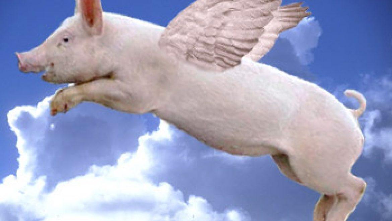 איזה סוג של חזירים אתם? סוד האושר (not kidding) מצוי בתשובה לשאלה! פוסט על שתי האסטרטגיות המרכזיות לאושר וכיצד בחירה בזאת שעובדת משנה הכול!