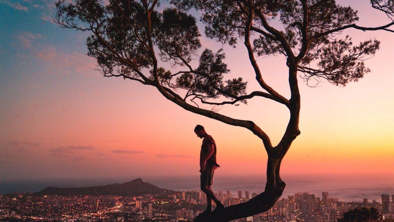 כי האדם, עץ השדה – סוד הגדילה והריפוי האנושי כמטפורה לעץ